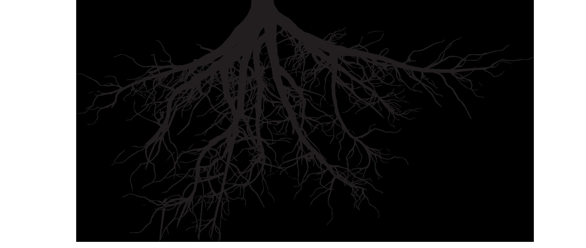 Blog 50 | Roots & Trees | OllO